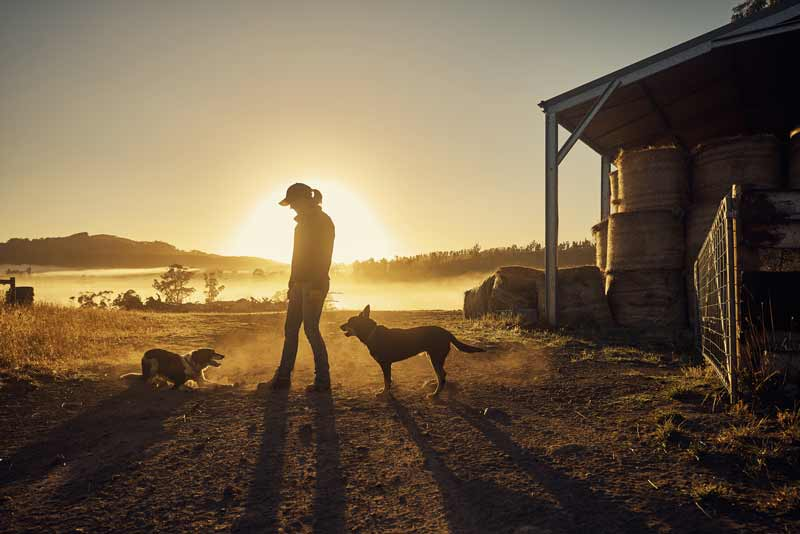 A farm woman in her field at sunrise with her dogs